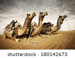 camels resting in the thar... | Shutterstock . vector #180142673