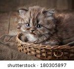 Stock photo british long hair kitten in a basket 180305897