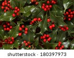 holly berries and leaves...