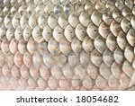 Fish Scales Carp Background