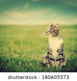 Cute Cat Sitting On Green...