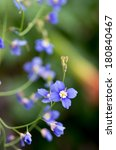 Small photo of brisk blue flower