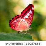 Red Butterfly On A Green Leaf