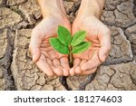 hands holding a tree growing on ... | Shutterstock . vector #181274603