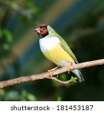 finches sitting on a branch in... | Shutterstock . vector #181453187