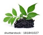 elderberry   sambucus nigra  ... | Shutterstock . vector #181841027
