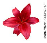 red lily flower with white... | Shutterstock . vector #181842347