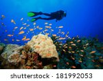 scuba diving on coral reef with ... | Shutterstock . vector #181992053