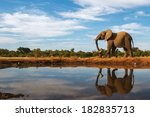 a single elephant is reflected... | Shutterstock . vector #182835713