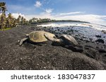 Punaluu Black Sand Beach With...