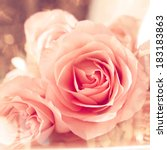 pink roses with natural light   Shutterstock . vector #183183863