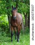 Small photo of Portrait of nice brown warmblood standing on pasturage