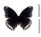 Beautiful Black Butterfly...