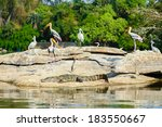 A Group Of Storks Perched On A...