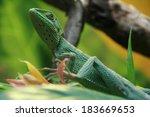 gecko | Shutterstock . vector #183669653
