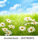 daisy field with blue sky | Shutterstock . vector #183780893