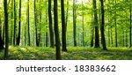 a rural road through a forest... | Shutterstock . vector #18383662