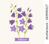 floral educational cards. b for ... | Shutterstock .eps vector #183900317