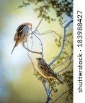 Two Birds   Sparrows