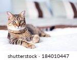 Young Cat In Bedroom