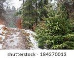 Ukraine  Winter Forest In The...