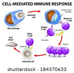 Cell-mediated immunity. T lymphocytes do not secrete antibodies. this response incorporates activated macrophages, killer cells, antigen-specific cytotoxic T-lymphocytes, and cytokines.