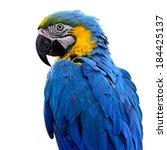 a beautiful bird blue and gold... | Shutterstock . vector #184425137