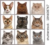 Nine Cat Heads Looking At The...