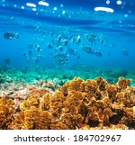 coral fish in  red sea egypt | Shutterstock . vector #184702967
