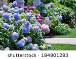 Landscaped Yard With Hydrangeas