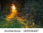 Path In Wood In Golden Morning...