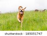 Happy Dogs Having Fun In A...