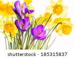 Purple Crocuses And Yellow...