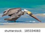 pelicano | Shutterstock . vector #185334083