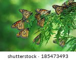 a flutter of monarch... | Shutterstock . vector #185473493