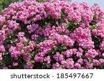 Angera Flower Bush