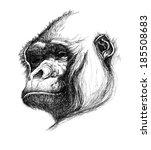 hand drawn gorilla. jpeg version | Shutterstock . vector #185508683