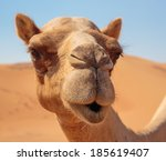 camels in the desert | Shutterstock . vector #185619407