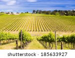 vineyard with rows of grapes...   Shutterstock . vector #185633927