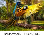 Beautiful Colourful Parrot Ove...
