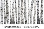 Birch Trunks Isolated On White...