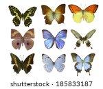 butterfly on white | Shutterstock . vector #185833187