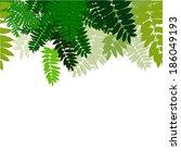 green leaves of the tree. vector   Shutterstock .eps vector #186049193