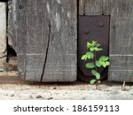 Old Aged Weathered Wood Surfac...