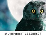Boreal Owl Against The Moon At...