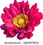 Stock vector mona lisa flower pink flower spring flower isolated on white background 186397853