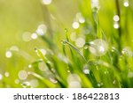 Dew Drops On The Green Grass....
