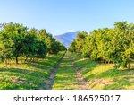 orange tree  | Shutterstock . vector #186525017