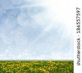 dandelion field  blue sky and... | Shutterstock . vector #186557597