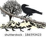 the crow on the brunch | Shutterstock .eps vector #186593423